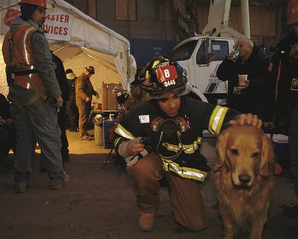 Animals Poster featuring the photograph September 11th Rescue Workers Receive by Ira Block