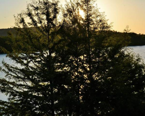 Setting Poster featuring the photograph Setting Sun Through A Cypress Tree by Don McAllister