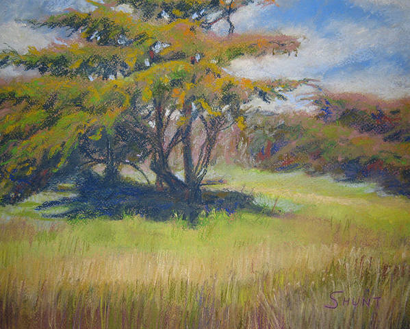 Tree Poster featuring the painting Shade by Shirley Braithwaite Hunt