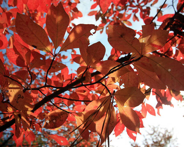 Leaves Poster featuring the photograph Shades Of Autumn by Mary Haber