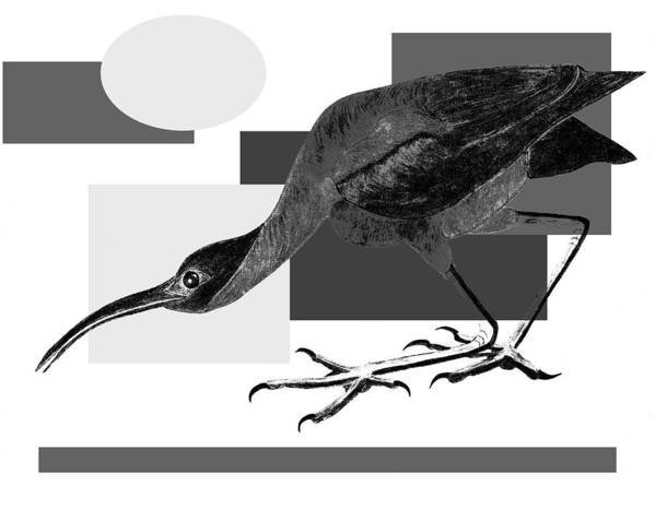Bird Poster featuring the painting Shadow Dancing by Tess M J Iroldi