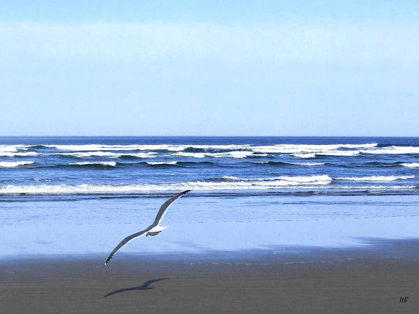 Seagull Poster featuring the photograph Shadow On The Sand by Will Borden