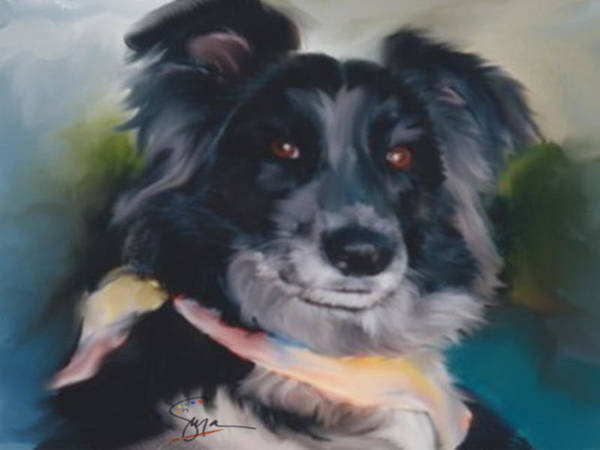 Border Collie Poster featuring the photograph Shadow by Susan Blanton