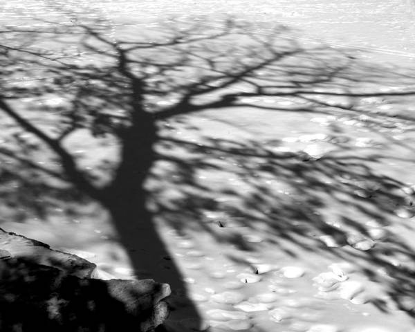 Shadow Poster featuring the photograph Shadow Tree Herrick Lake Naperville Illinois by Michael Bessler