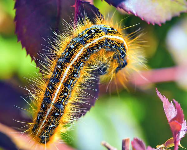 Caterpillar Poster featuring the photograph Shagerpillar by Bill Tiepelman