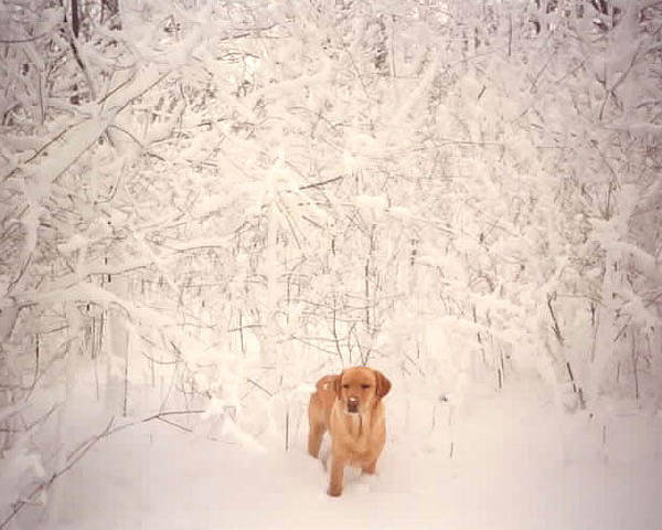 Winter Poster featuring the photograph Shamee by Kathy Schumann