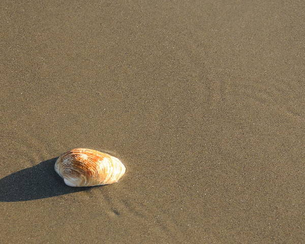 Beach Shell Sand Sea Ocean Poster featuring the photograph Shell And Waves Part 1 by Alasdair Turner