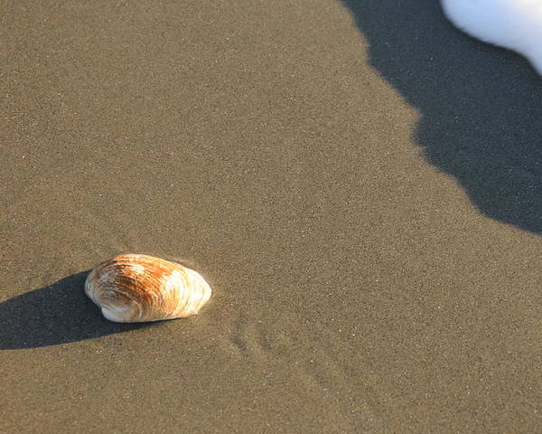 Beach Shell Sand Sea Ocean Poster featuring the photograph Shell And Waves Part 2 by Alasdair Turner