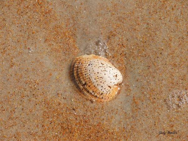 Beach Poster featuring the photograph Shell by Judy Waller