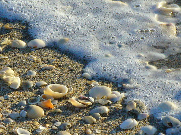 Shells Poster featuring the photograph Shells And Seafoam by Peggy King