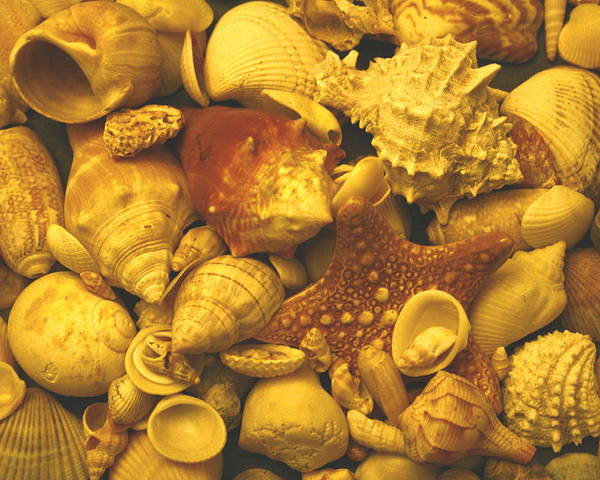 Seashells Poster featuring the photograph Shells by Christopher Kirby