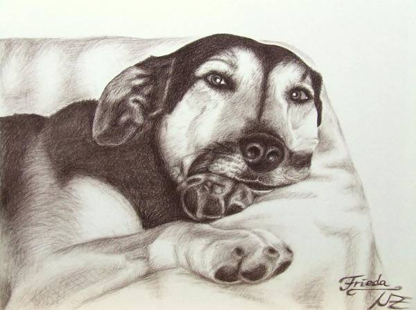 Dog Poster featuring the drawing Shepherd Dog Frieda by Nicole Zeug