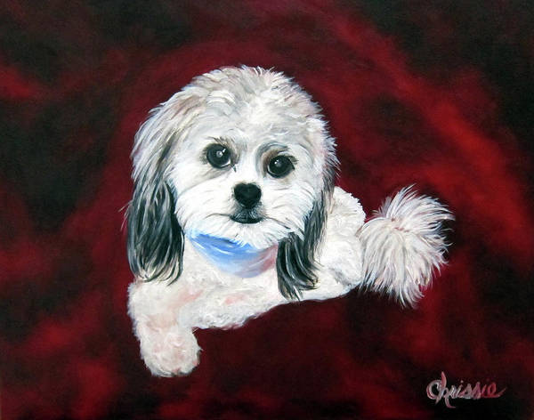 Pet Poster featuring the painting Shih Poo by Chrissie Leander