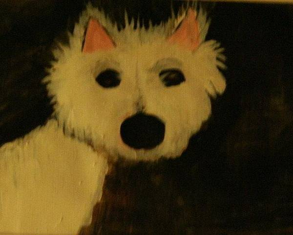 Westie West Hiighland White Terrier Dog Black Nose Eyes Ears Pink Hair Cute Love Poster featuring the painting Shock by Shellie Gustafson