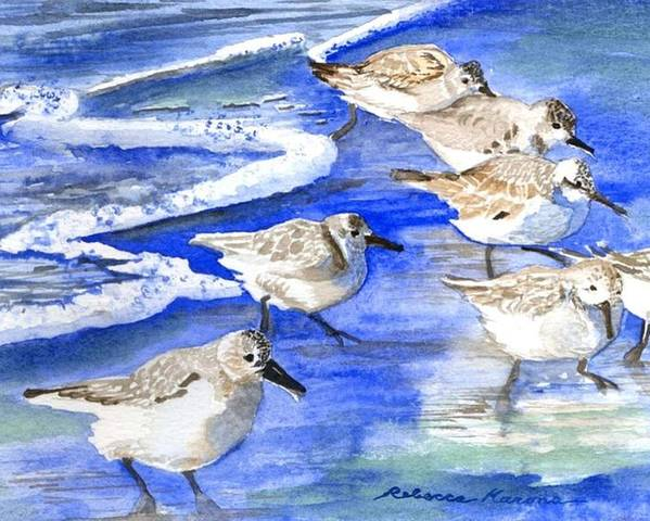 Plovers Poster featuring the painting Shore Birds by Rebecca Marona