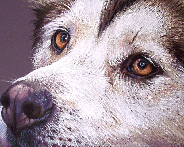Dog Poster featuring the drawing Siberian Husky by Elena Kolotusha