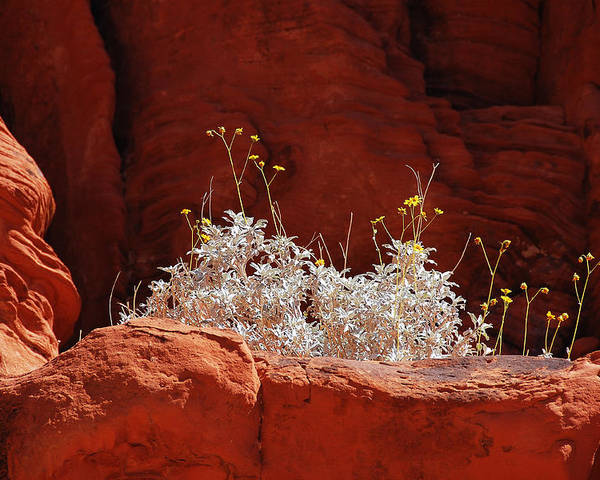 Darin Volpe Nature Poster featuring the photograph Signs Of Life - Valley Of Fire State Park by Darin Volpe