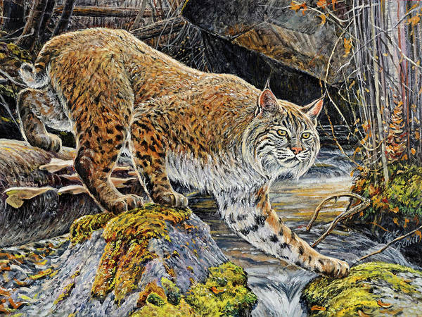 Bobcat Poster featuring the painting Silent Caution by Steve Spencer