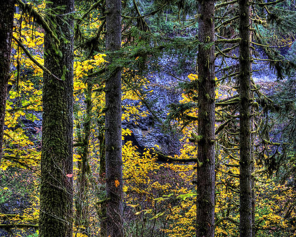 Landcsape Poster featuring the photograph Silver Falls State Park Oregon 2 by Lee Santa