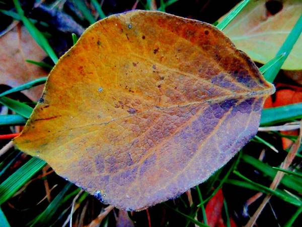 Single Leaf Poster featuring the photograph Single Brown Leaf by Beth Akerman