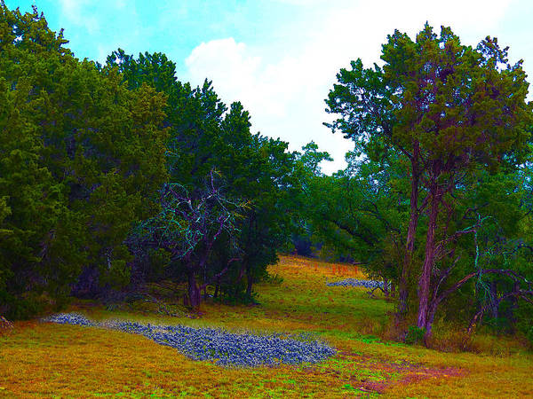 Poster featuring the photograph Sister's Hill Country Backyard by Robert J Sadler