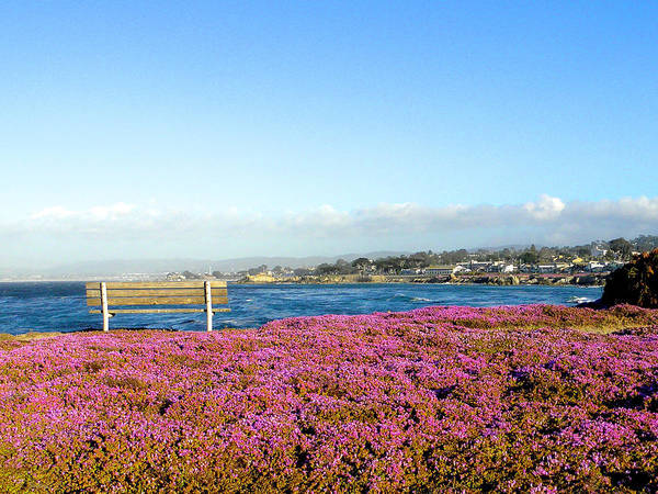 Pacific Grove Poster featuring the photograph Sit Awhile by Peter Silzer
