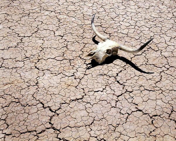 Desert Poster featuring the photograph Skull In Desert 2 by Kelley King
