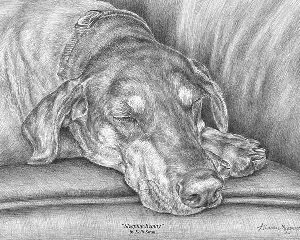 Doberman Poster featuring the drawing Sleeping Beauty - Doberman Pinscher Dog Art Print by Kelli Swan