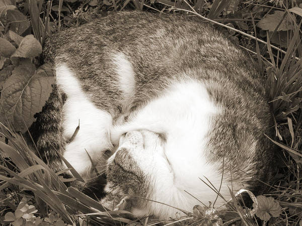Pets Poster featuring the photograph Sleeping by Daniel Csoka