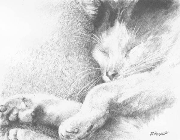Cat Poster featuring the drawing Sleeping Sadie by Meagan Visser