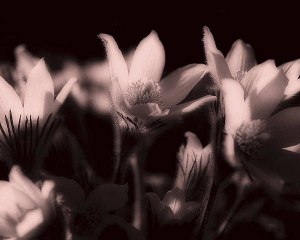 Flowers Poster featuring the photograph Sleepy Flowers 2 by Marilyn Hunt