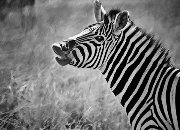 Zebra Poster featuring the photograph Smile by Claudia Daniels
