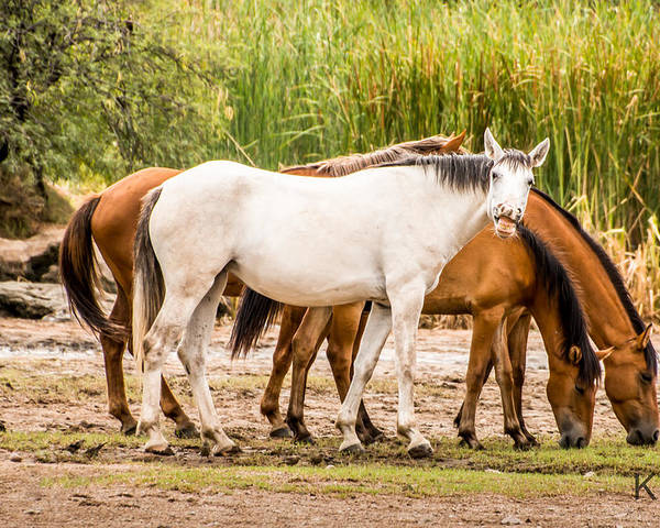 Horses Poster featuring the photograph Smile by Sandy Klewicki