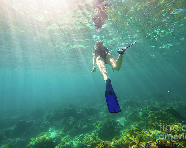 Reef Poster featuring the photograph Snorkeling In Coral Reef by Benny Marty