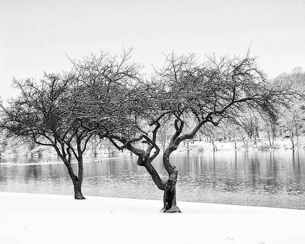 Snow Poster featuring the photograph Snow Along The Schuylkill River by Bill Cannon