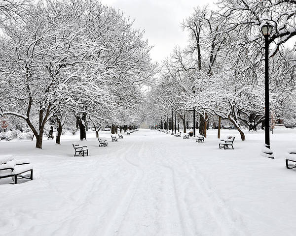 Horizontal Poster featuring the photograph Snow Covered Benches And Trees In Washington Park by Shobeir Ansari