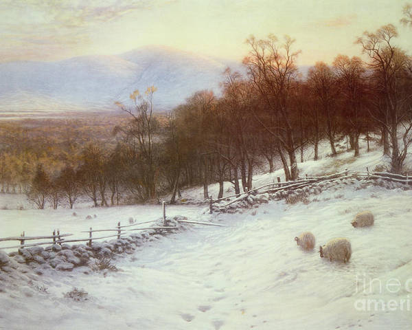 Snow Poster featuring the painting Snow Covered Fields With Sheep by Joseph Farquharson