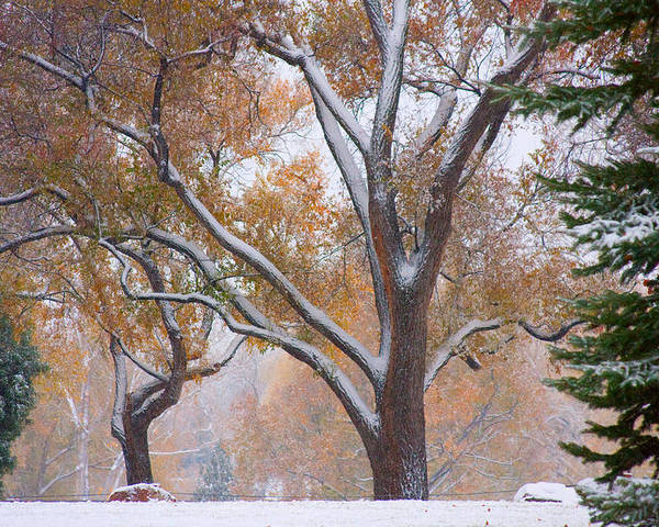 Trees Poster featuring the photograph Snowy Autumn Landscape by James BO Insogna