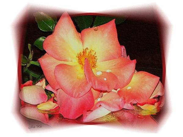 Pink Poster featuring the photograph Soft Pink Rose by Judy Waller