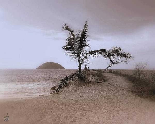 Palm Tree Poster featuring the photograph Soledad by Kathy Simandl
