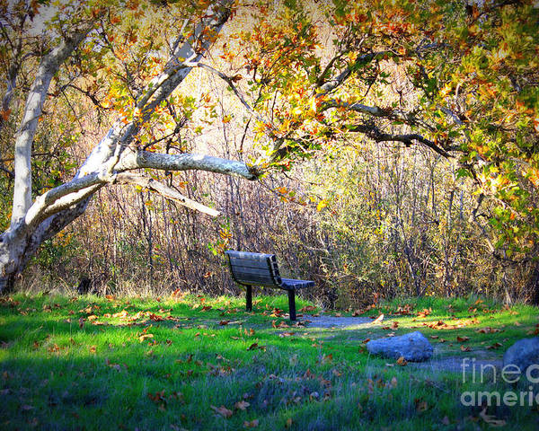 Landscape Poster featuring the photograph Solitude Under The Sycamore by Carol Groenen