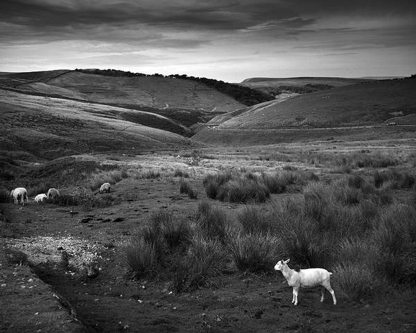Peak District Poster featuring the photograph Somewhere by Dorit Fuhg