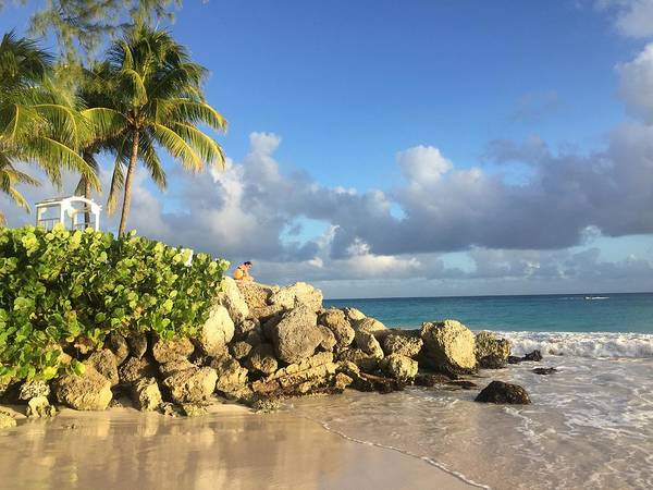 Caribbean Poster featuring the photograph Somewhere in Barbados by Cindy Ross