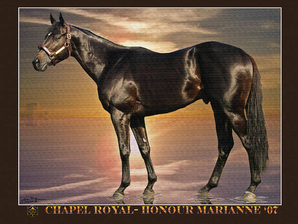 Race Horse Thoroughbred Colt Poster featuring the painting Son Of Chapel Royal-honour Marianne'07 by John Breen