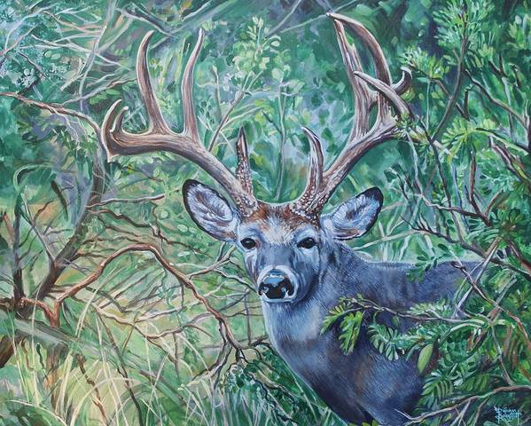 Deer Poster featuring the painting South Texas Deer In Thick Brush by Diann Baggett