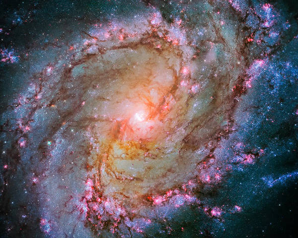 Southern Pinwheel Galaxy Poster featuring the photograph Southern Pinwheel Galaxy - Messier 83 - by Jennifer Rondinelli Reilly - Fine Art Photography