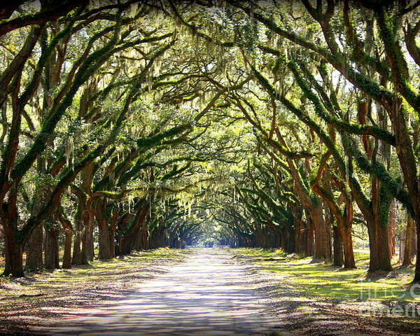 Landscape Poster featuring the photograph Southern Way by Carol Groenen