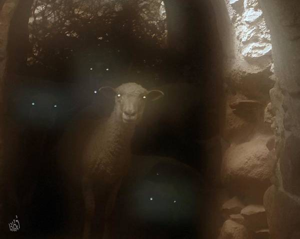 Sheep Poster featuring the photograph Spectral Sentinels by Kathy Simandl