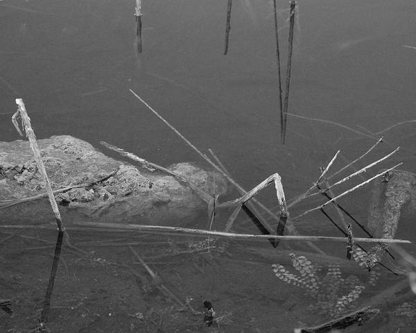 Black And White Poster featuring the photograph Spider In Water by Rob Hans