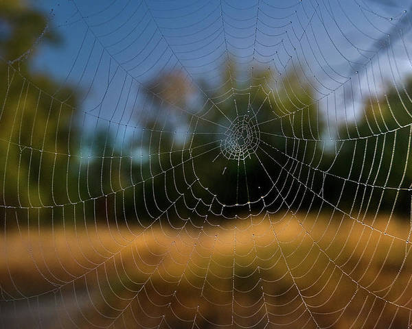 Cobweb Spiderweb Poster featuring the photograph Spiderpane Window by Kevin Felts